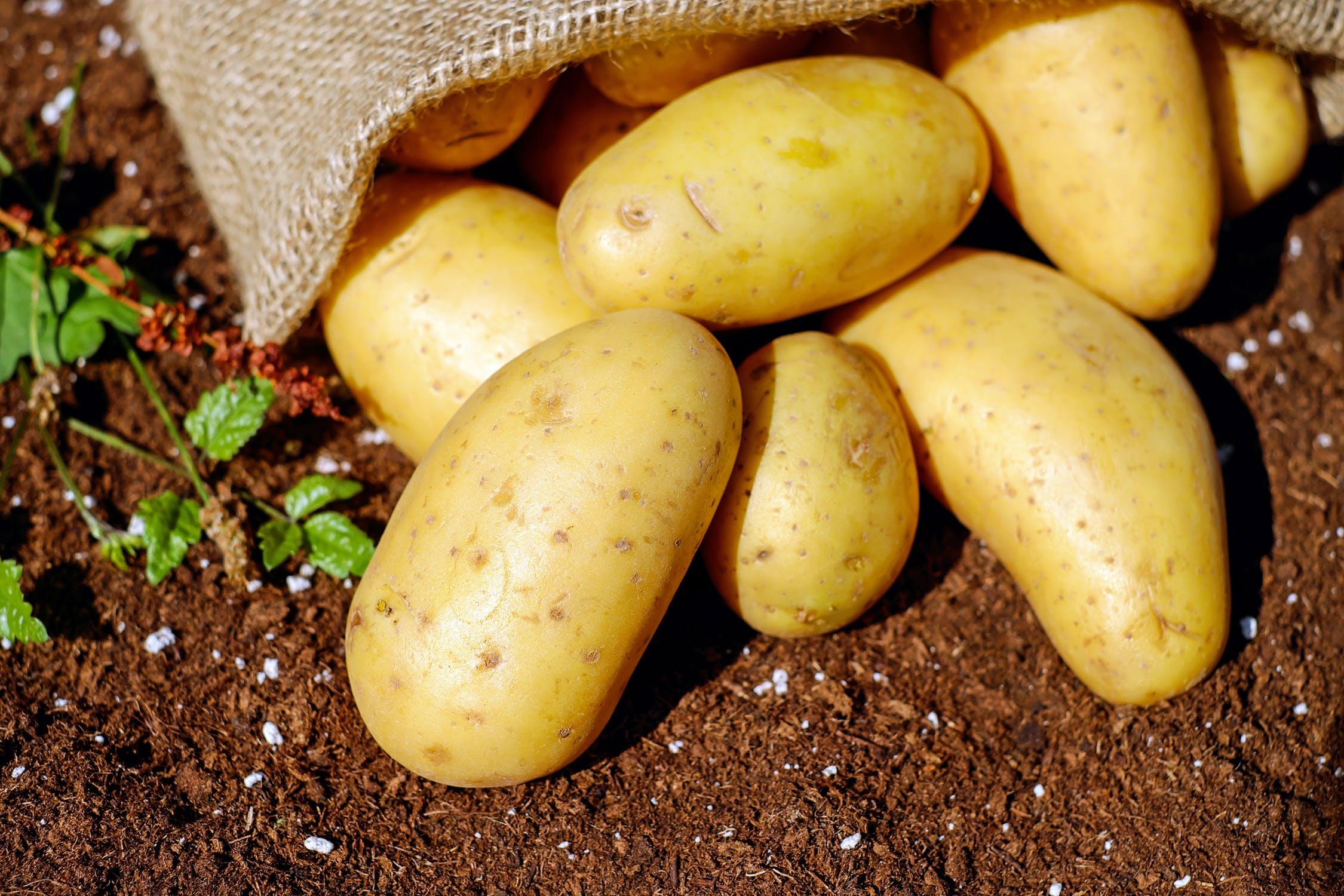 Pestovanie zemiakov