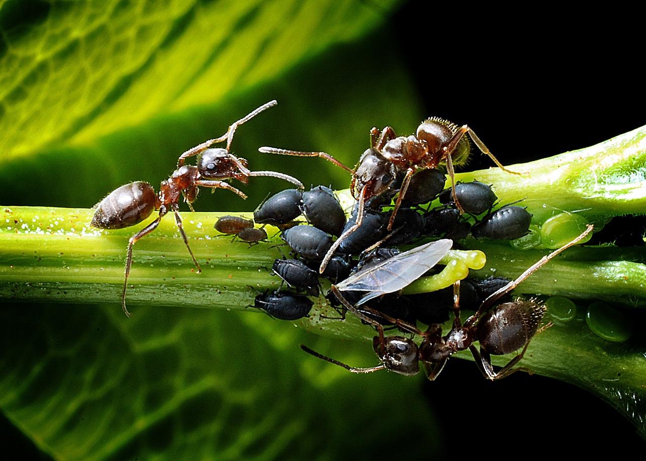 mravce-na-zahrade