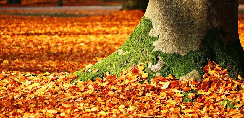 Lístie na jeseň