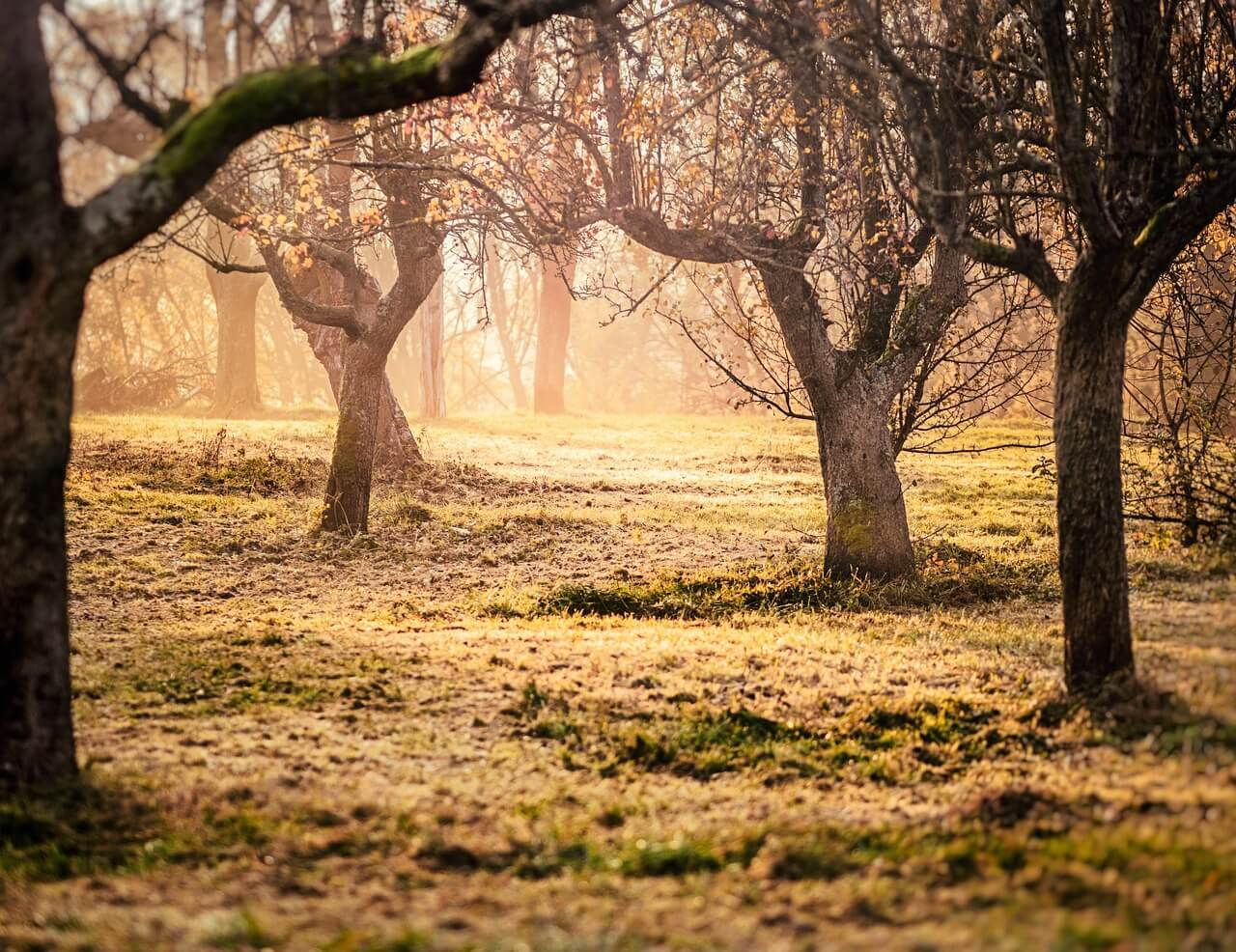 predjarný postrek ovocných stromov